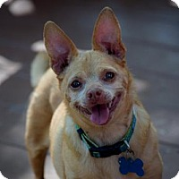 Adopt A Pet :: Lucy - Fairfield, OH