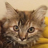 Adopt A Pet :: Lemon - Midvale, UT