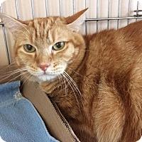Adopt A Pet :: Howie - AT EDISON PETSMART - East Brunswick, NJ