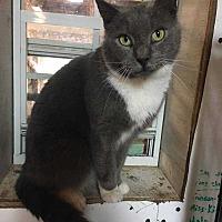 Adopt A Pet :: Big Boi - Harleysville, PA
