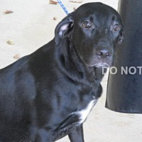 Adopt A Pet :: Butler - Rocky Mount, NC