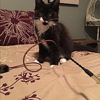 Adopt A Pet :: Jupiter - Portland, ME