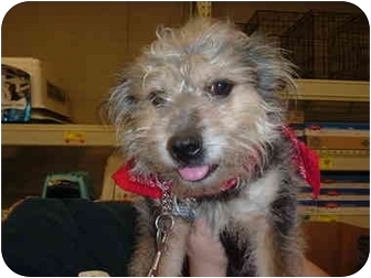 Terrier (Unknown Type, Medium) Mix Dog for adoption in Stafford, Virginia - Missy Jake