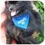Photo 2 - Pomeranian Dog for adoption in Osseo, Minnesota - Tommy