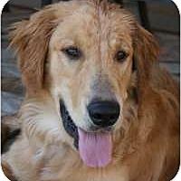 Adopt A Pet :: Jake - Scottsdale, AZ