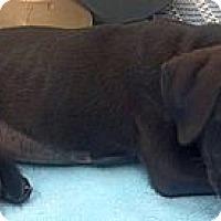 Adopt A Pet :: Tippy - Phoenix, AZ