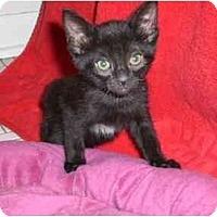 Adopt A Pet :: Cuddy - Lombard, IL