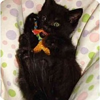 Adopt A Pet :: Droid - Richmond, VA