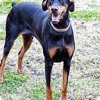 Adopt A Pet :: Maddie - killeen, TX