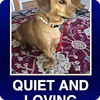 Adopt A Pet :: Hamlet - Morrisville, PA
