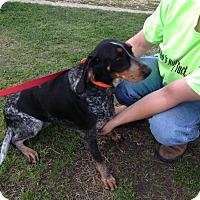 Adopt A Pet :: Heavenly Savannah - Dallas, TX