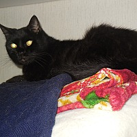 Adopt A Pet :: Sammy - Old Town, FL