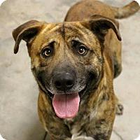 Adopt A Pet :: Morty - Austin, TX