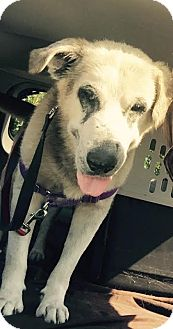 German Shepherd Dog Mix Dog for adoption in New Albany, Ohio - Hunter
