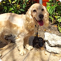 Adopt A Pet :: Jax - Sugarland, TX