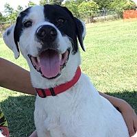 Adopt A Pet :: Sergio - Norman, OK