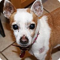 Adopt A Pet :: BABY - Hurricane, UT