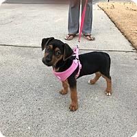Adopt A Pet :: Lana - Alpharetta, GA