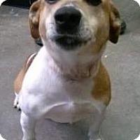 Adopt A Pet :: Rosi - Kendall, NY