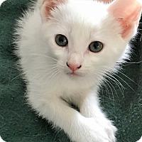 Adopt A Pet :: Elijah - Chattanooga, TN
