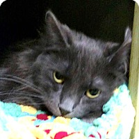 Adopt A Pet :: Nermal - Holland, MI