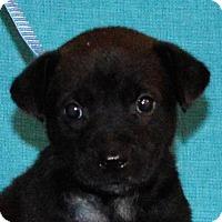 Adopt A Pet :: **NIKE** meet July 8th! - Mukwonago, WI