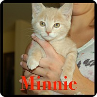 Adopt A Pet :: Minnie - Great Mills, MD