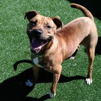 Mixed Breed (Large) Mix Dog for adoption in Lynchburg, Virginia - Hooch