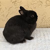 Adopt A Pet :: Iradessa - Bonita, CA
