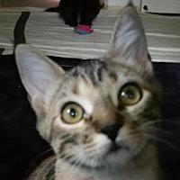 Adopt A Pet :: Jean - Auburn, CA