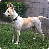 Adopt A Pet :: Sunny - Cathedral City, CA