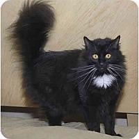 Adopt A Pet :: Blue Star - Bartlett, TN