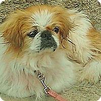 Adopt A Pet :: Gizmo *Courtesy Post* - Vansant, VA