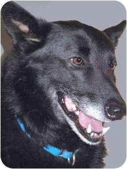 German Shepherd Dog Mix Dog for adoption in Grass Valley, California - Daisy
