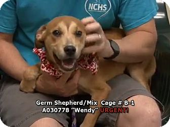 German Shepherd Dog Mix Puppy for adoption in Newnan City, Georgia - Wendy