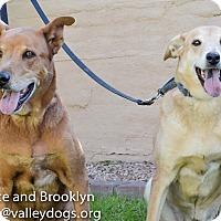 Adopt A Pet :: Brooklyn & Prince - Gilbert, AZ