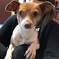 Adopt A Pet :: Morty Cranson - Seattle, WA
