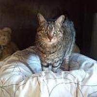 Adopt A Pet :: Tiger - Calimesa, CA