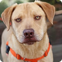 Adopt A Pet :: Hank-Adoption Pending - Pinehurst, NC