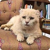 Adopt A Pet :: George - Portland, IN