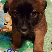 Adopt A Pet :: Effie - Burlington, VT