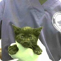 Adopt A Pet :: A289874 - Conroe, TX