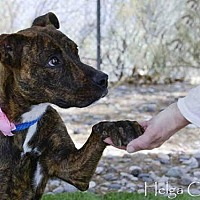 Adopt A Pet :: PINK - Albuquerque, NM
