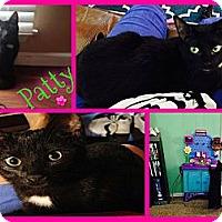 Adopt A Pet :: Patty - Washington, DC