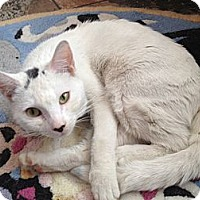 Adopt A Pet :: Opal - East Hanover, NJ