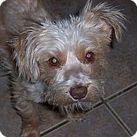 Adopt A Pet :: Dolly - Tucson, AZ