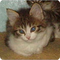 Adopt A Pet :: Lilly - Keizer, OR