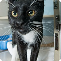 Adopt A Pet :: Pauley - New York, NY