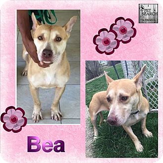 Terrier (Unknown Type, Small) Mix Dog for adoption in Washington, Pennsylvania - Bea