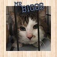 Adopt A Pet :: Mr. Biggs - Westbury, NY